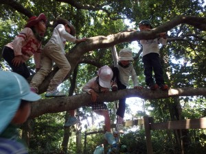 木登り満員